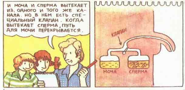 otkuda-beretsya-sperma-u-zhenshin